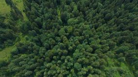 Pine forest top. Aerial view stock video footage