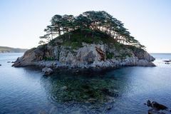 Pine forest tree by the sea Royalty Free Stock Photography