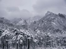Pine forest under the snow and big mountains on the background. stock photo