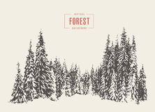 Pine forest vector illustration hand drawn, sketch. Pine forest vector illustration, hand drawn sketch Stock Photo