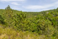 Pine forest and vegetation. In Aljezur, Algarve, Portugal Stock Photo