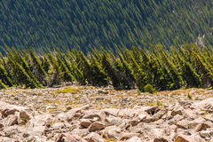 Pine forest viewed sideways in Rocky Mountains Stock Photos