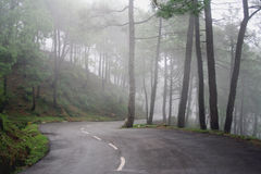 Pine forest Winding roads of himalayas, India Royalty Free Stock Photography