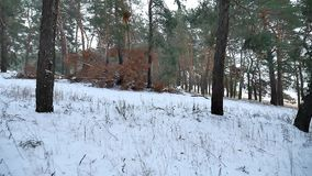 Pine forest winter christmas tree snow field motion in winter nature beautiful landscape. Pine forest winter christmas tree snow field motion winter nature stock video footage