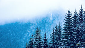 Pine forest in winter mountains Royalty Free Stock Photos