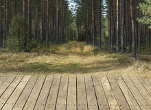 Pine forest with wooden floor background Royalty Free Stock Photo