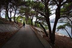 Pine forests of Cavtat. Dubrovnik. Croatia. Croatian coniferous forests stock photography