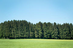 Pine forests Stock Photos