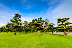 Pine forests of tokyo city Royalty Free Stock Images