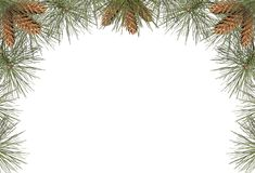 Pine Frame Royalty Free Stock Photos