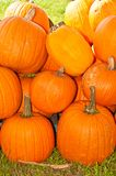 Pine of freshly picked, local pumpkins stock photography