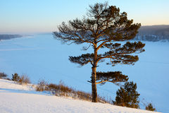 Pine on a frozen river Royalty Free Stock Images