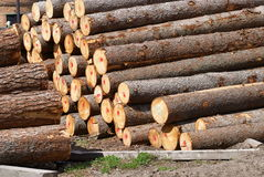 Pine and fur-tree logs. Are combined before a dryer. Timber Royalty Free Stock Photo