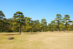 Pine garden Royalty Free Stock Photos