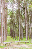 Pine Garden at Chiang Mai Thailand Royalty Free Stock Images