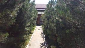 Pine garden in the household royalty free stock photos