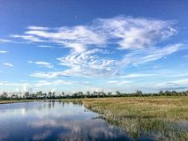 Pine Glades Natural Area in Florida Swamps. Dock over the marsh in a Florida Swamp Stock Photos