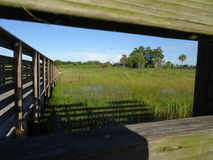 Pine Glades Natural Area in Florida Swamps. Dock over the marsh in a Florida Swamp Royalty Free Stock Photo