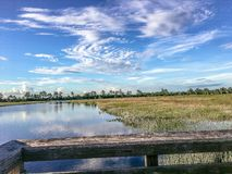 Pine Glades Natural Area in Florida Swamps. Dock over the marsh in a Florida Swamp Stock Photo