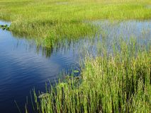Pine Glades Natural Area in Florida Swamps. River and swamp grass in the marshes Royalty Free Stock Photography