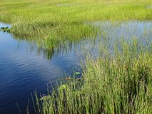 Pine Glades Natural Area in Florida Swamps. River and swamp grass in the marshes Stock Photo