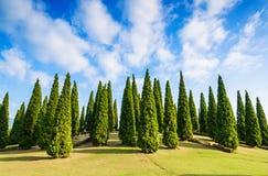 Pine green garden Royalty Free Stock Photo