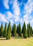 Pine green garden Stock Photography