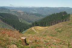 Pine Grove Clearing. Valley perspective of pine grove after being cleared. Lone stump remains with large clusters of trees in the valley below Stock Photos