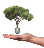 Pine growing from base of light bulb Royalty Free Stock Photo