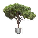 Pine growing from the base of the light bulb Royalty Free Stock Photos