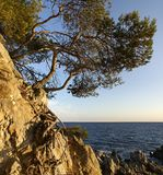 Pine growing on a cliff Royalty Free Stock Photos