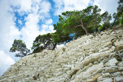 Pine growing on a rock Royalty Free Stock Photos