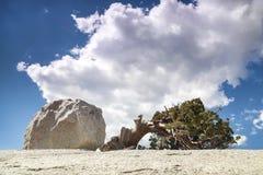 Pine growing on rocks, Yosemite National Park Stock Image