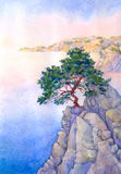 Pine on a high rocky cliff above the sea Stock Photos