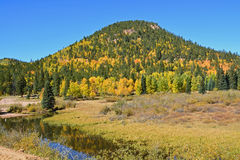 A Pine Hill Peppered with Golden Aspens near Stream. A pine covered hill rises behind a stream in the mountains peppered with aspens turning gold at fall Royalty Free Stock Photo
