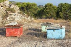 Pine honey hives Royalty Free Stock Image