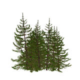 Pine illustration Royalty Free Stock Images