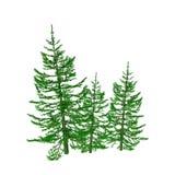 Pine illustration Stock Image