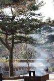Pine & incense burner Royalty Free Stock Images