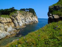 Pine island. Sea landscape with pine trees and violet flowers on island rocks against blue sky Royalty Free Stock Image