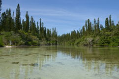 Pine Island Baie Oro New Caledonia Royalty Free Stock Image