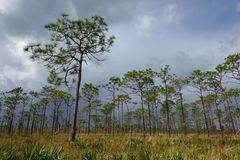 Pine Island East Loop Trail, Orlando Florida, In Storm. Pine Island East Loop Trail in Orlando`s Shingle Creek Conservation Area headwaters for the everglades as royalty free stock image