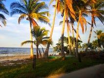 Pine island. Southwest florida stock photography