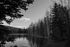 Pine Lake Vacation BW Royalty Free Stock Images