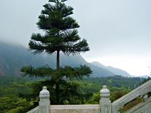 Pine Lantau Island. Pine tree on Lantau Island outside Hong Kong near the Tian Tan Buddha with low-hanging clouds shrouding mountains in the background Royalty Free Stock Photos