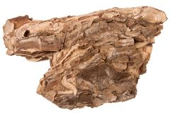 Pine large single brown dry bark piece isolated on white background. Close up stock image