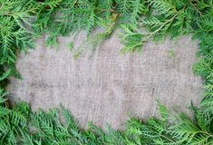Pine leaves border. Pine leaves around the edges of rustic burlap and old paper Royalty Free Stock Photos