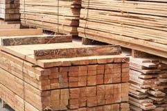 Pine limber limber Stock Photo