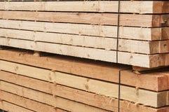 Pine limber limber Royalty Free Stock Photos