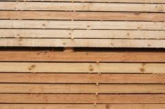 Pine limber limber Royalty Free Stock Images
